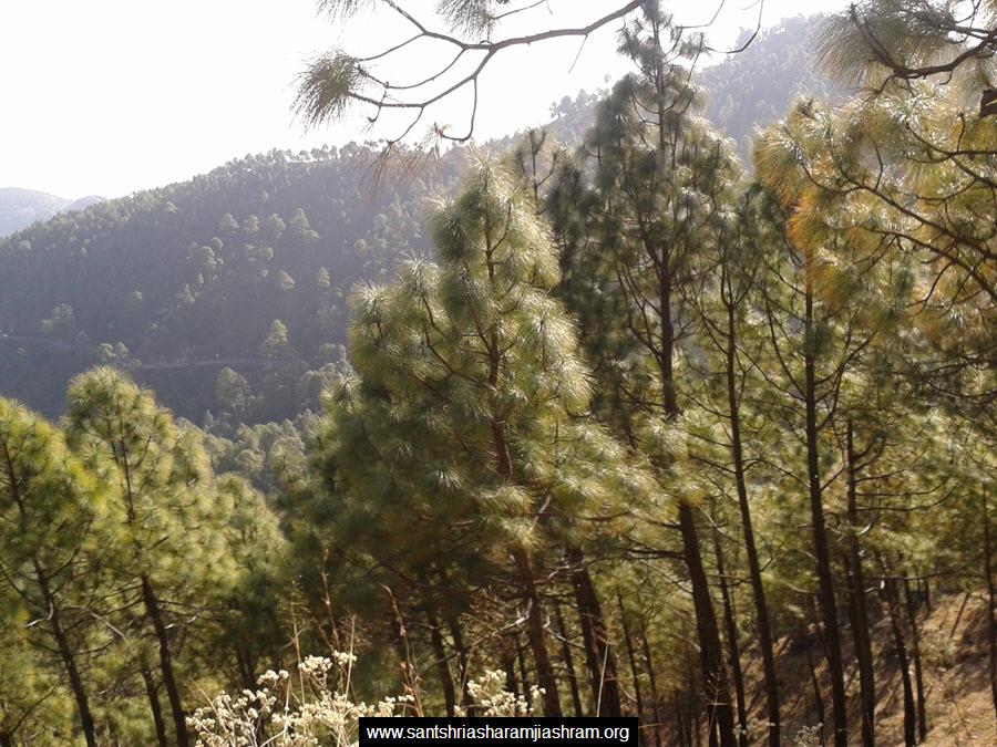 tehri ashram (1)