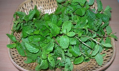 pudina-mint-leaves