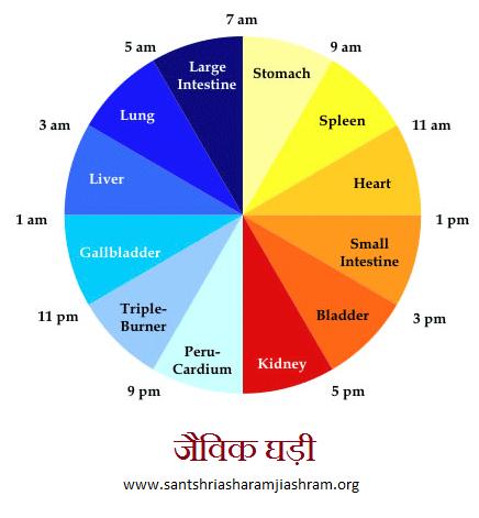 जैविक घड़ी,body clock
